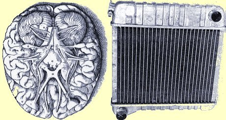 Vesalius' image of a brain and a Chavette radiator