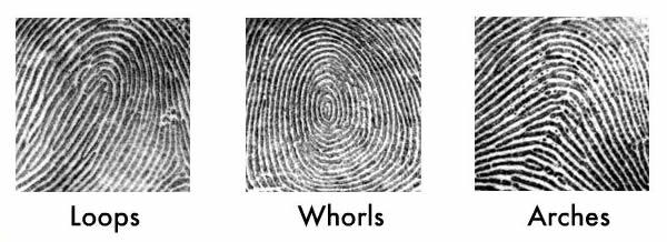 No. 2529: Comparing Fingerprints