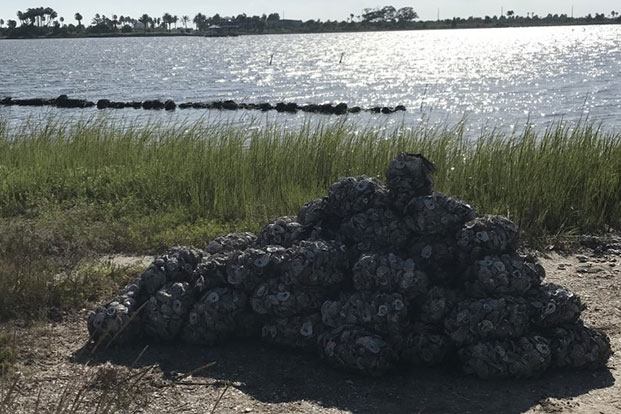 Oyster shells on the shore
