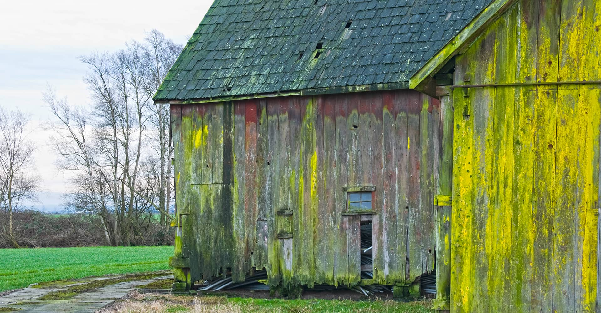Wooden barn mostly covered in bright mildew.