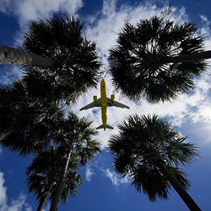 Ground up view of an airplane above four palm trees